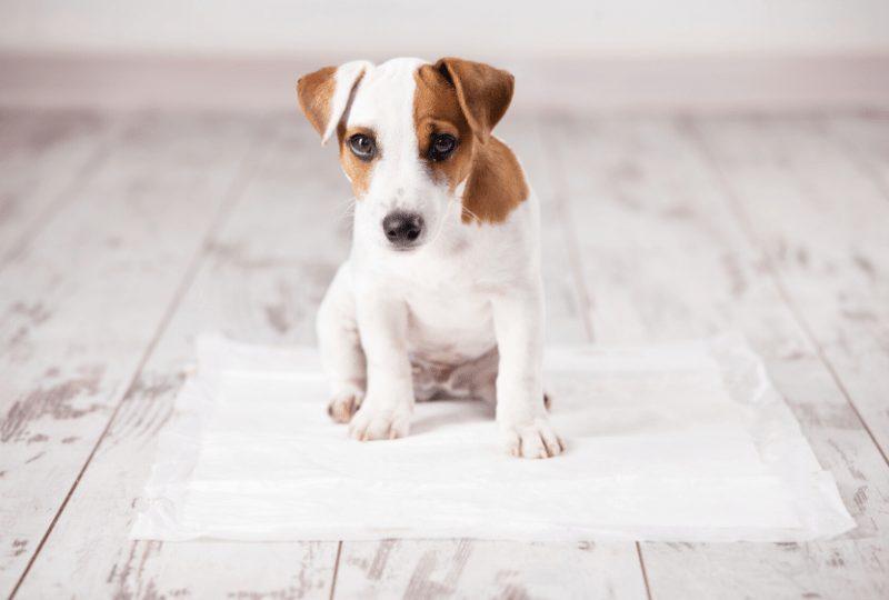 Come Educare & Addestrare Un Cucciolo Di Cane Correttamente-min