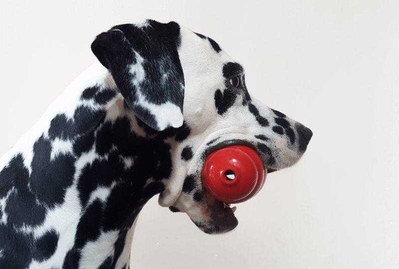 Guida Completa Sul Giocattolo Kong Per Cani [2020]