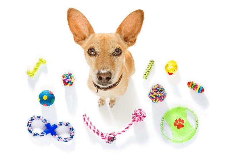I Migliori Giochi Per Cani [ Classifica & Recensione 2020]
