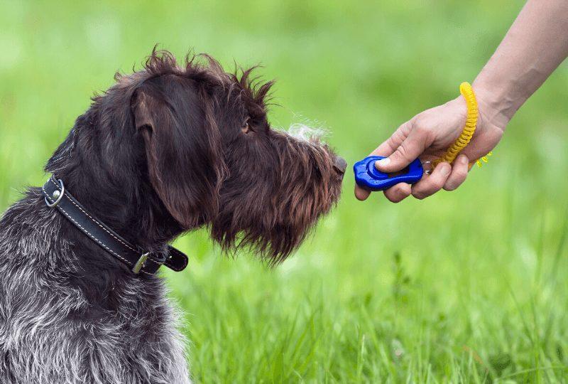 Il Clicker Per Cani _ Come Addestrare Un Cane Con Il Clicker Training