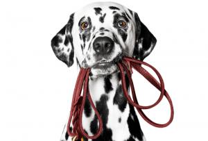 Il Miglior Guinzaglio Per Cani [Classifica & Recensione 2020]