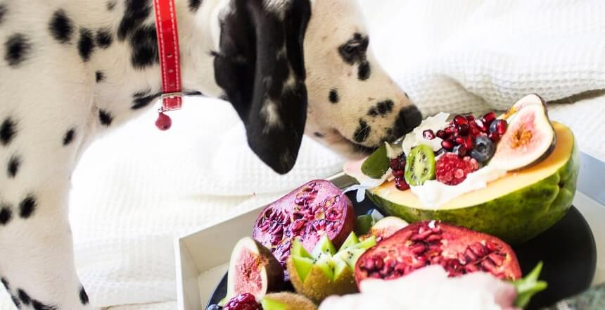frutta-ai-cani-quale-frutta-possono-mangiare-i-cani-2 (1)