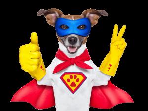 Jack Russel Super cane - corso di addestramento cani online e fai da te