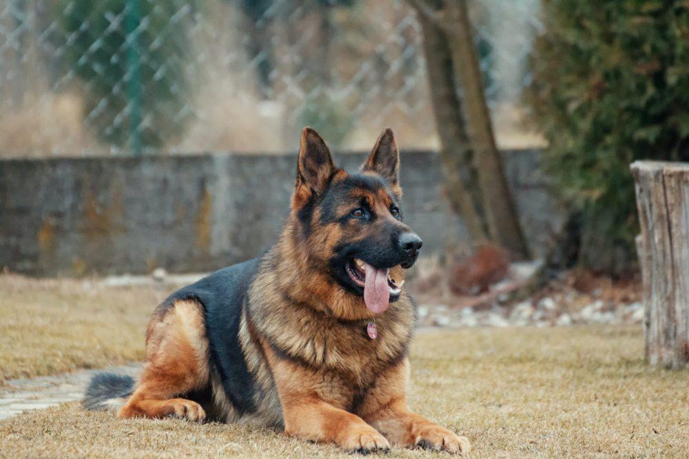 Testimonial super cane Tyson (Giovanni, Rimini)