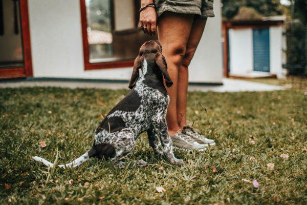 Testimonial super cane (Nina, Salerno)
